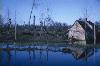 Saint-Rémy-du-Plain - Moulin / Colombage / Etang | Albert Poulain